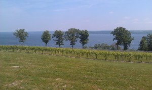 Lake Cayuga from Thirsty Owl