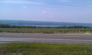 Lake Seneca from Shalestone Vineyard