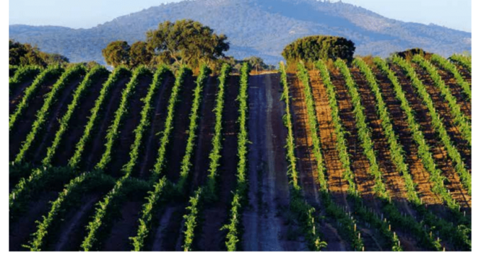 Header image for a post about Alentejo Wines in Portugal